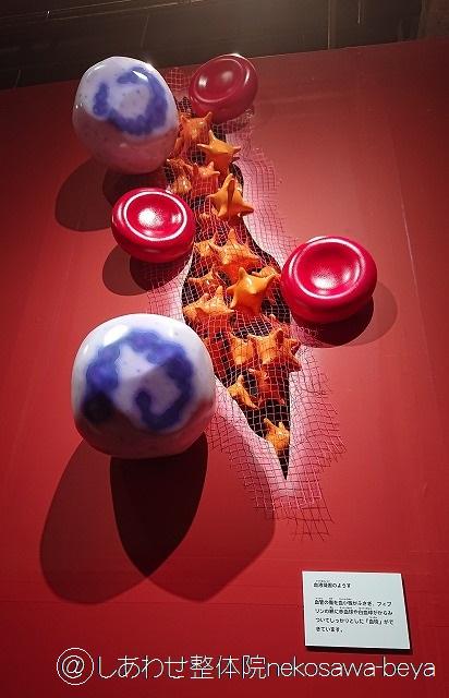 傷口をふさいでいく血球を表したモデル