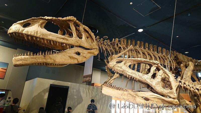 恐竜マブサウルスの化石