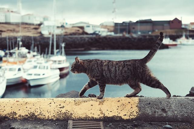 船の見える港のヘリを歩くねこちゃん