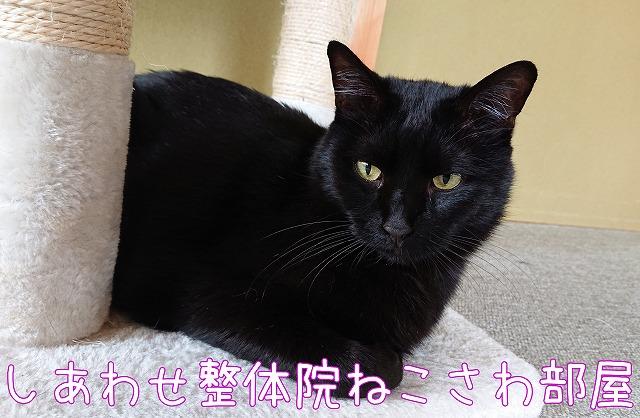 見つめる黒猫マイケル