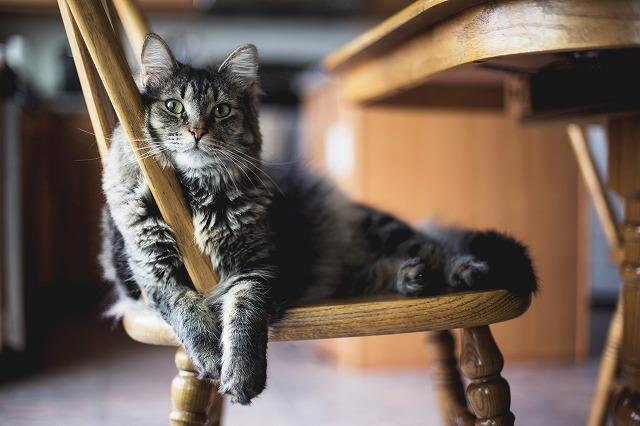 椅子でくつろぐねこちゃん
