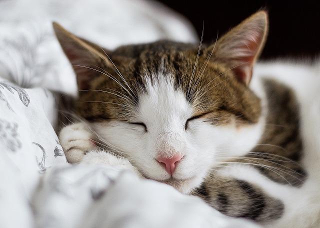 安心して眠るねこ